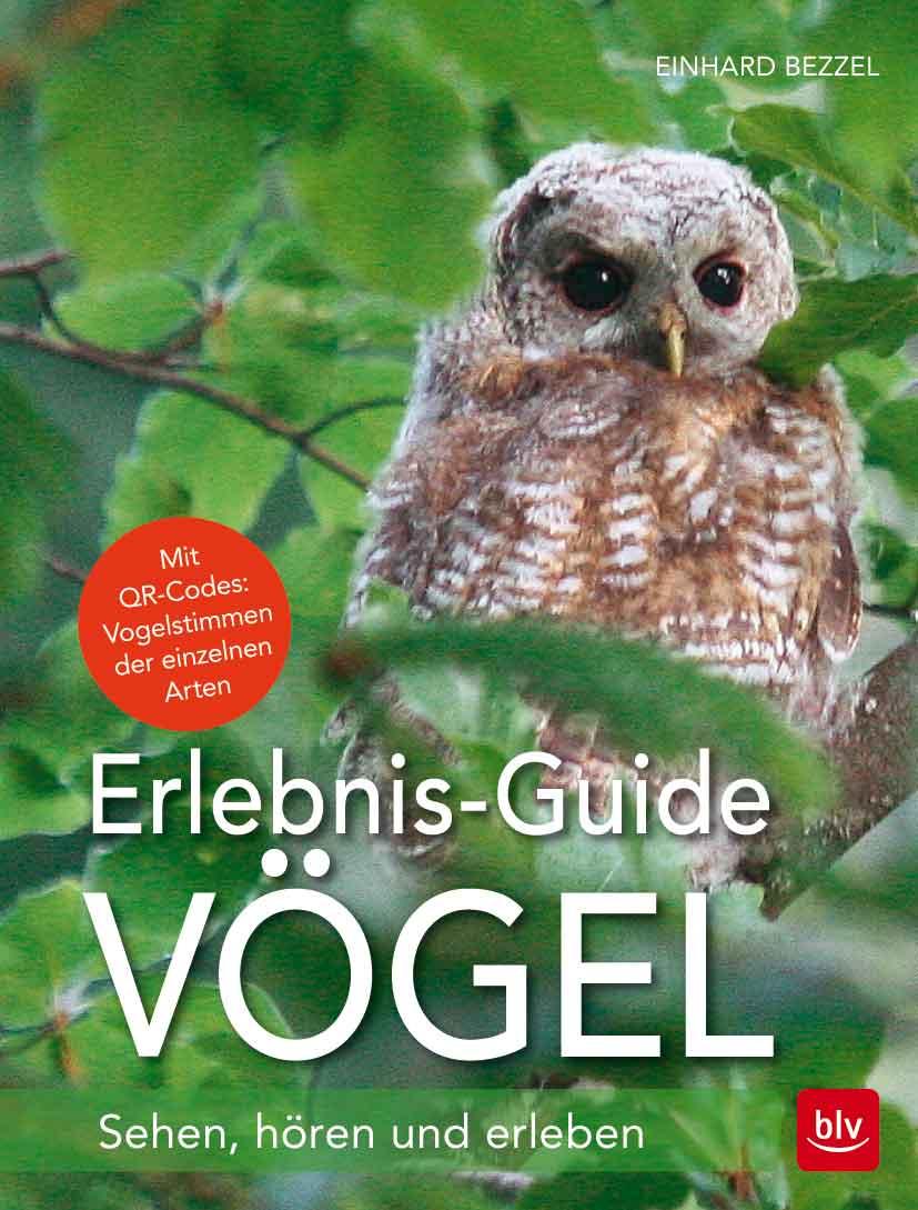 Cover-Vögel