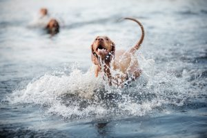 Foto: Kseniya/stock.adobe.com